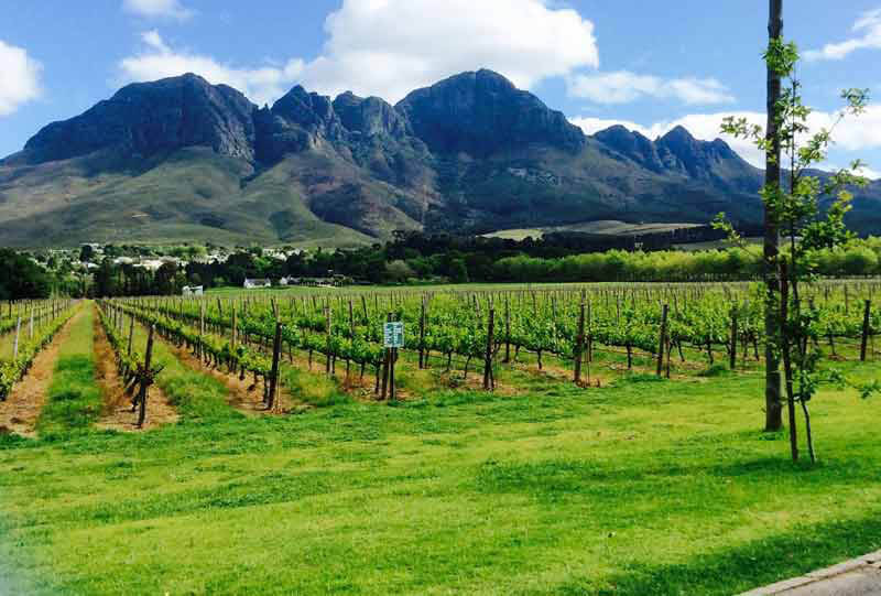 Lourensford wine estate: Around the corner, lots to do